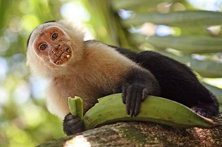 fotografie zvířat z volné přírody