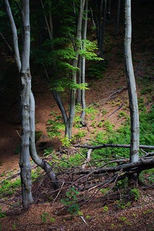 fotografie z přírody