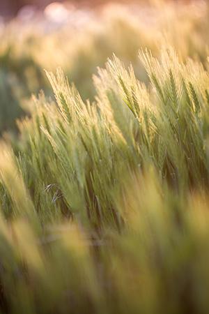 makro fotografie z přírody